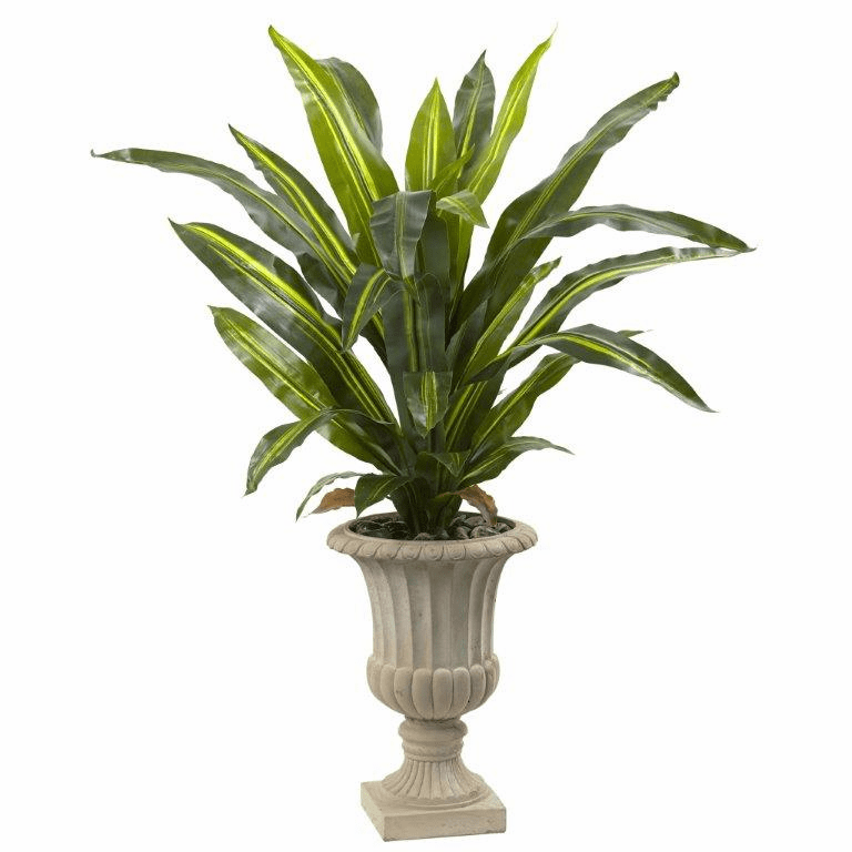 5� Dracaena Plant with Urn (Real Touch) -