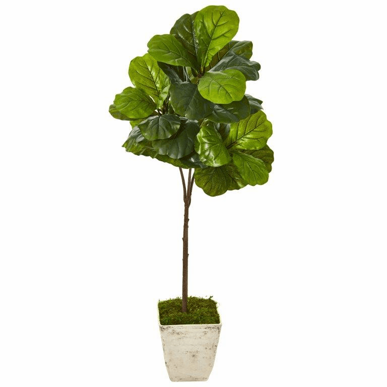 5� Fiddle Leaf Artificial Tree in Country White Planter (Real Touch) -