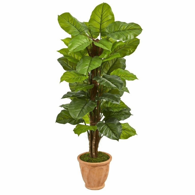 5� Large Leaf Philodendron Artificial Plant in Terracotta Planter (Real Touch)