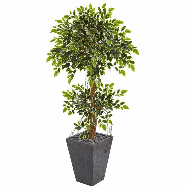5� Variegated Ficus Artificial Tree in Slate Planter