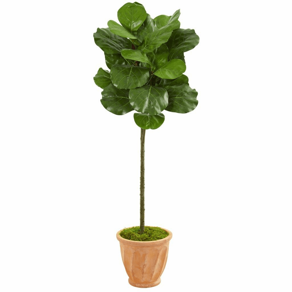 57� Fiddle Leaf Artificial Tree in Terra Cotta Planter