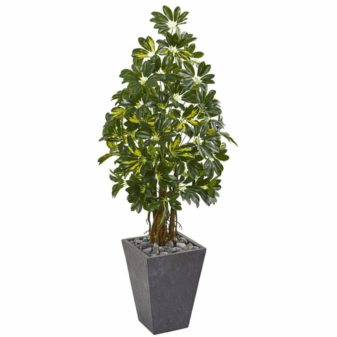 "57"" Schefflera Artificial Tree in Slate Planter"