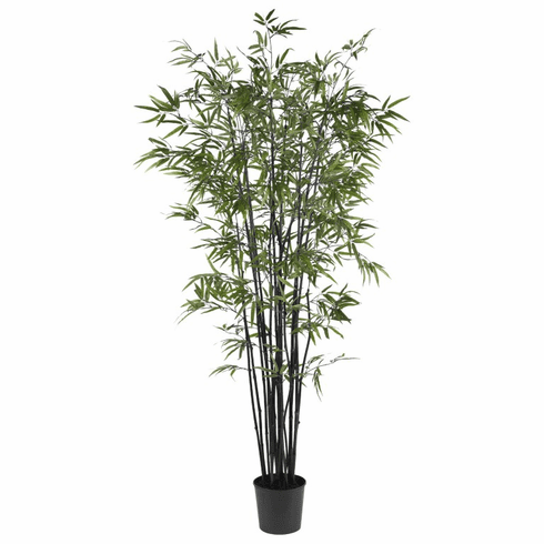 6.5' Black Bamboo Silk Tree