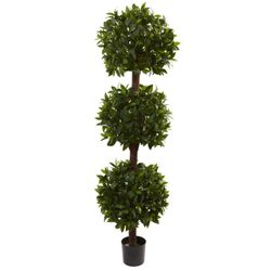 6.5' Sweet Bay Triple Ball Topiary