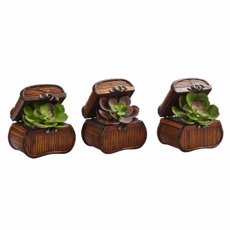 "6"" Artificial Echeveria Cactus in Chest (Set of 3)"