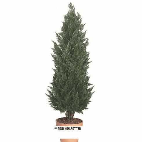 6' Artificial Outdoor Cypress Tree - (Indoor/Outdoor) UV Infused