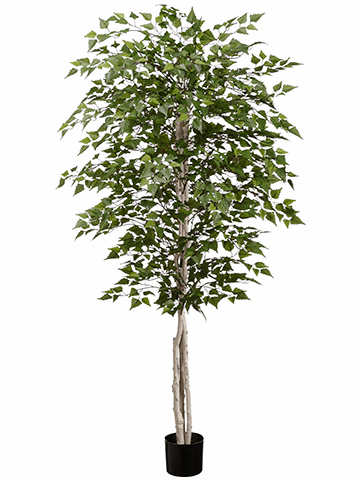 6' Birch Artificial Tree in Pot - Set of 2