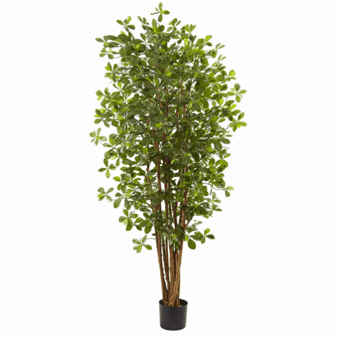6' Black Olive Silk Tree