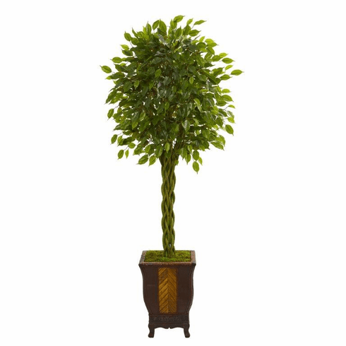 6' Braided Ficus Artificial Tree in Decorative Planter  -