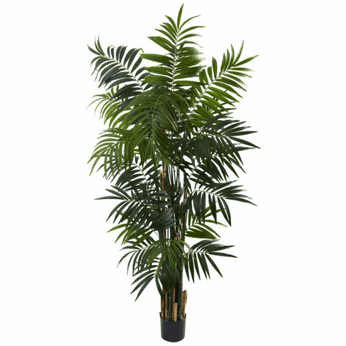 6' Bulb Areca Palm Tree