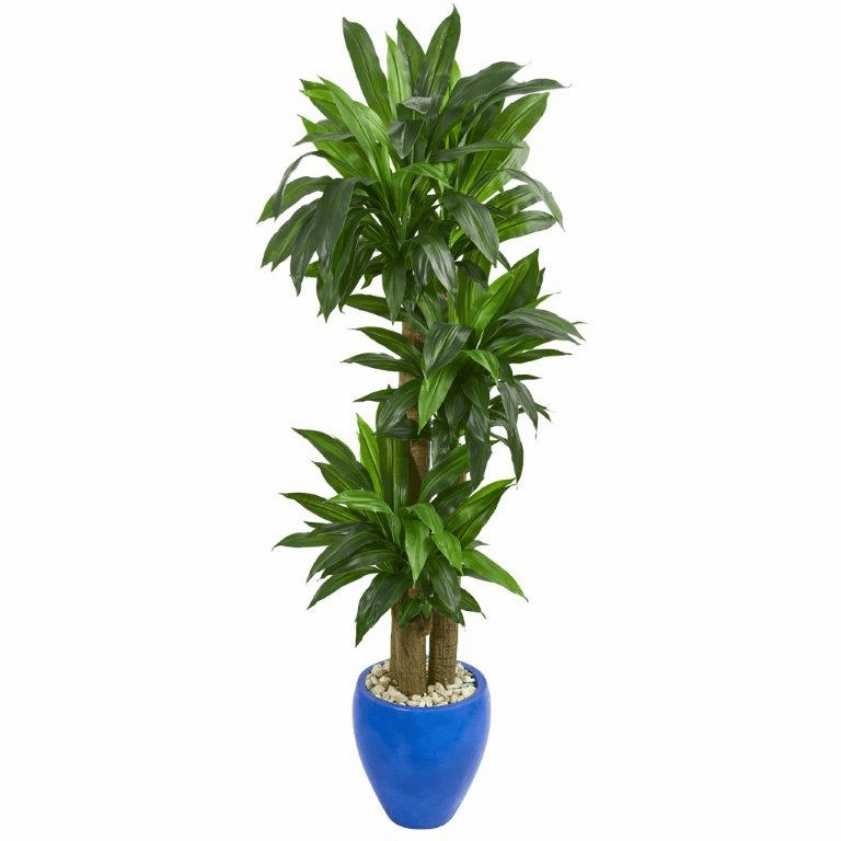 6� Cornstalk Dracaena Artificial Plant in Blue Planter (Real Touch)