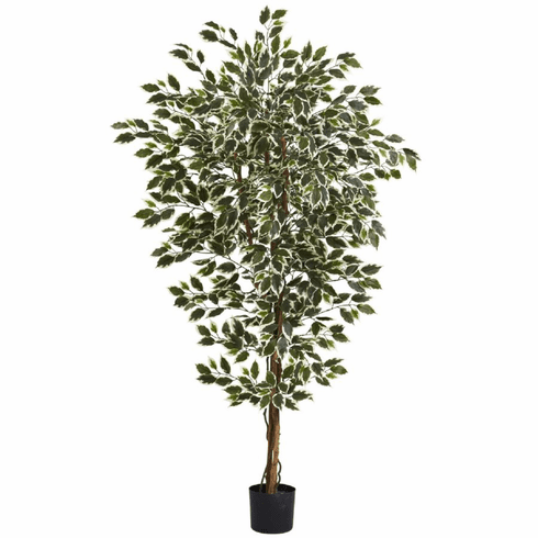 6' Hawaiian Ficus Tree x 3 w/1008 Lvs