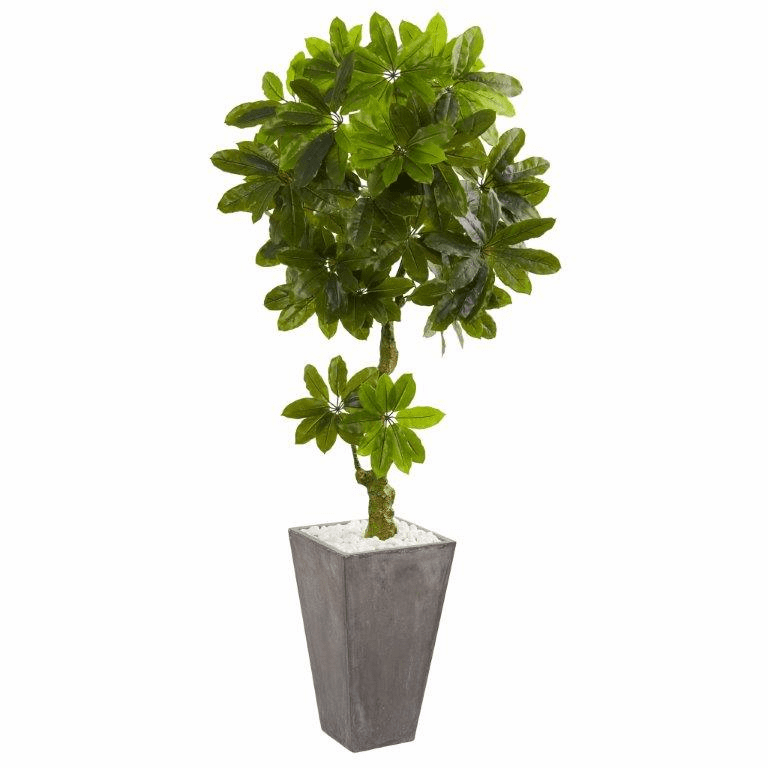 6� Schefflera Artificial Tree in Cement Planter UV Resistant (Indoor/Outdoor)