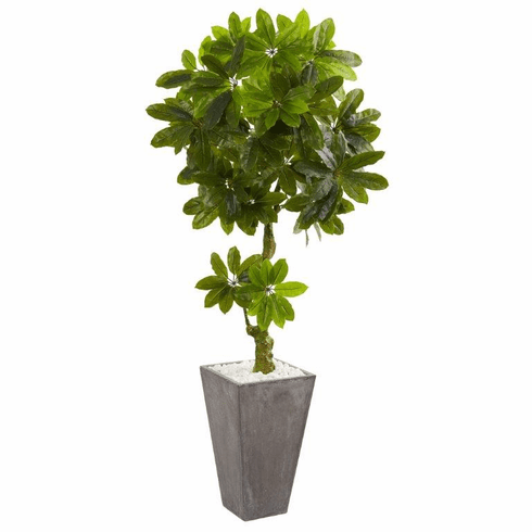 6' Schefflera Artificial Tree in Cement Planter UV Resistant (Indoor/Outdoor)