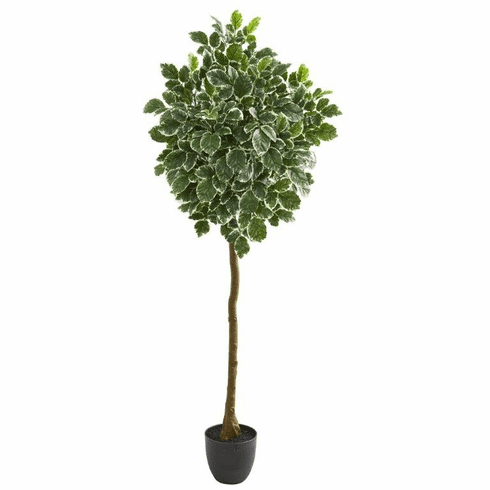 "6"" Variegated Aralia Artificial Tree"