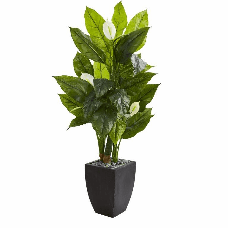 63� Spathyfillum Artificial Plant in Black Planter (Real Touch)