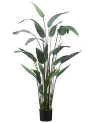"64"" Artificial Water Canna Floor Plant - Potted - Set of 2"