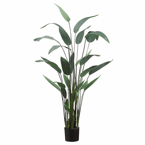 """64"""" Artificial Water Canna Floor Plant - Potted - Set of 2"""