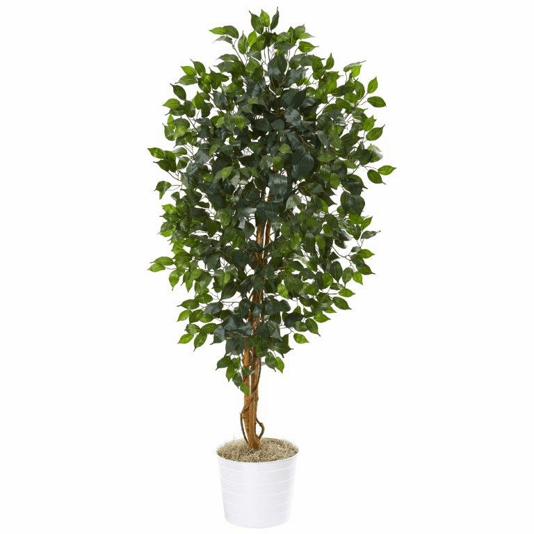 65� Ficus Artificial Tree in White Tin Planter -