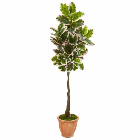"""67"""" Variegated Rubber Leaf Artificial Tree in Terra-Cotta Planter (Real Touch) -"""