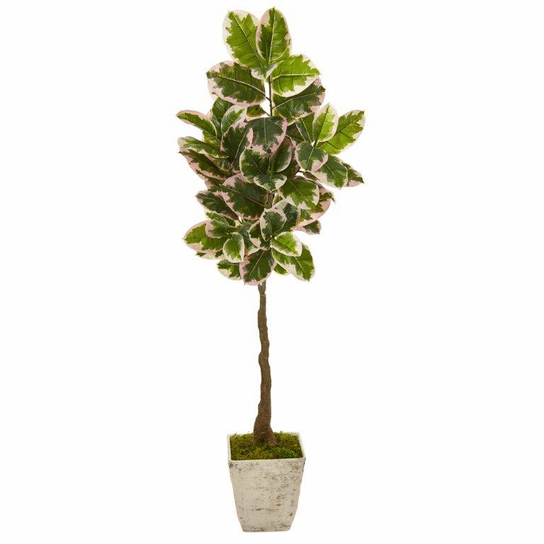 69� Variegated Rubber Leaf Artificial Tree in Country White Planter (Real Touch) -