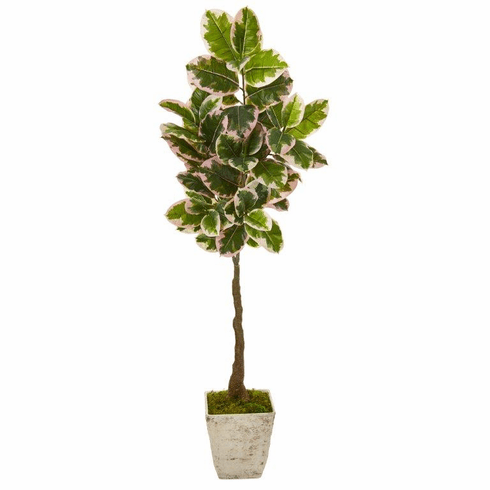 """69"""" Variegated Rubber Leaf Artificial Tree in Country White Planter (Real Touch) -"""