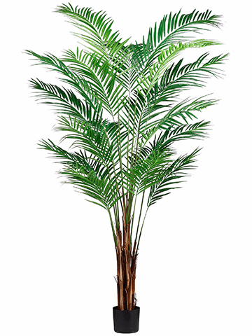 7' Areca Palm Tree x19 with 739 Leaves in Pot - Set of 2
