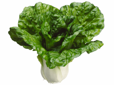 "7"" Artificial Cabbage Head - Set of 6"