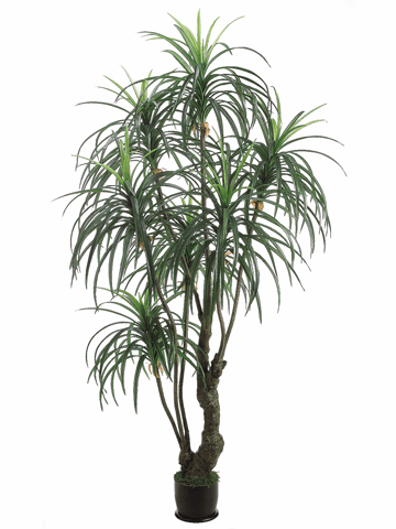 7' Artificial Yucca Tree X3 with 329 Leaves in Weighted Base - Set of 2