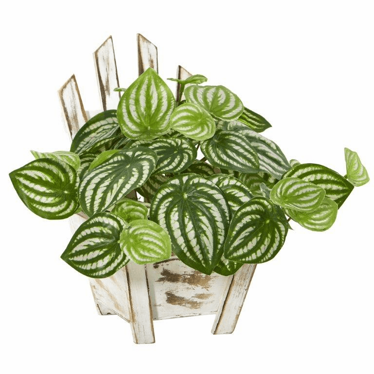 8� Watermelon Peperomia Artificial Plant in Chair Planter (Real Touch)