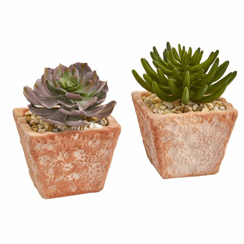"9"" Succulent Artificial Plant in Terra Cotta Planter (Set of 2)"