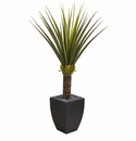 5' Agave Artificial Plant in Black Planter