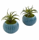 "8"" Air Plant Artificial Succulent in Blue Vase (Set of 2)"