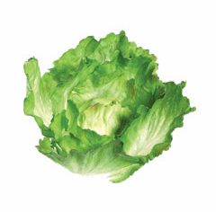 Artificial Lettuce & Cabbage