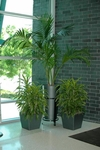 Artificial Plants for Your Office
