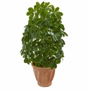 "35"" Baby Schefflera Artificial Plant in Terra Cotta Planter (Real Touch)"