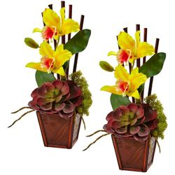 "14.75"" Cattleya Orchid and Succulent Arrangement (Set of 2) - Yellow"