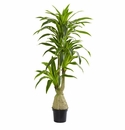 6.5' Dracaena Artificial Plant