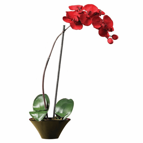 "20"" Holiday Phalaenopsis Orchid Arrangement"