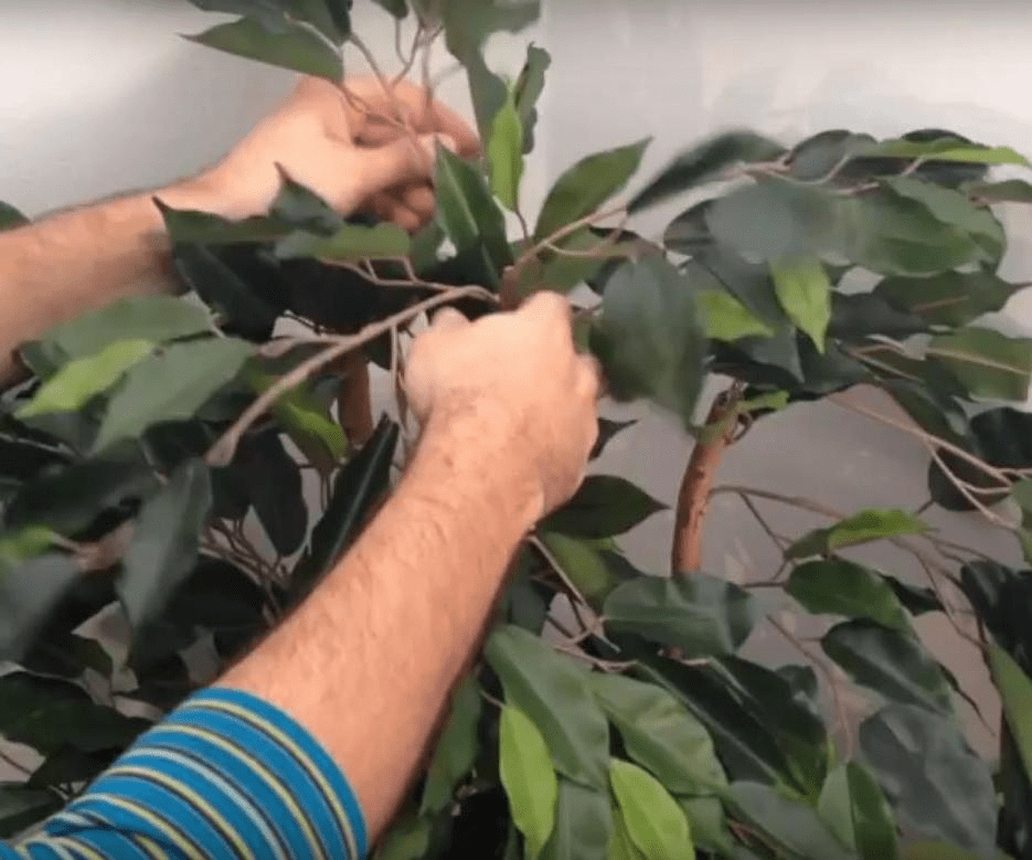 How to Shape Silk Plants and Trees
