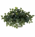 """14"""" Ivy with White Wash Planter Silk Plant"""