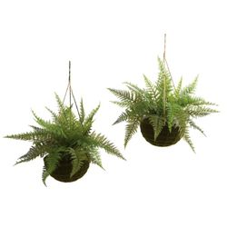 "13"" Leather Fern in Mossy Hanging Basket --- set of 2 (Indoor/Outdoor)"