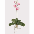 "16"" Mini Phalaenopsis Silk Orchid Flower With Leaves, 6 Stems"