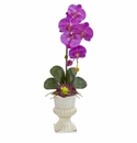 Orchid and Succulent Artificial Arrangement in Urn - Orchid