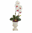 """33"""" Orchid and Succulent Artificial Arrangement in Urn - White"""