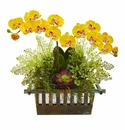 """23"""" Orchid, Succulent and Maiden Hair Artificial Arrangement  - Yellow"""