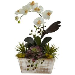 """21"""" Orchid & Succulent Garden with White Wash Planter"""