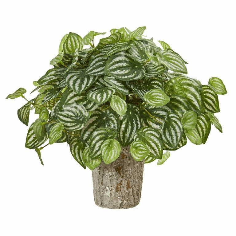 """13"""" Peperomia Artificial Plant in Weathered Oak Planter (Real Touch)"""