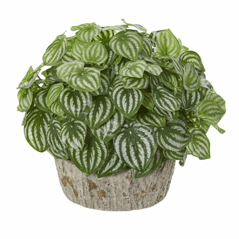 "13"" Peperomia Artificial Plant in Weathered Vase (Real Touch)"