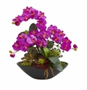 """21"""" Phalaenopsis Orchid Flower and Mixed Succulent Garden Artificial Arrangement in Black Vase - Orchid"""